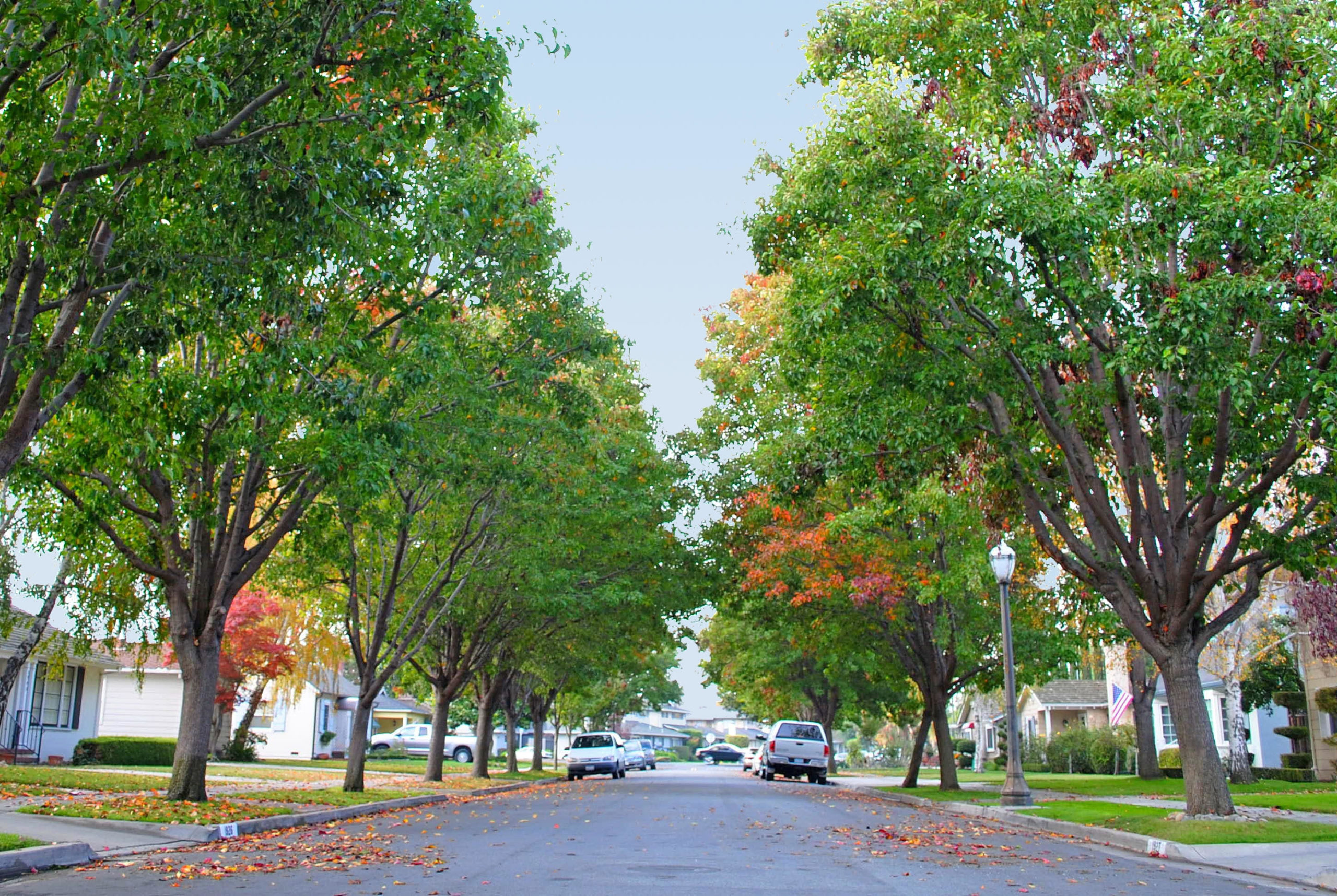Featured image for the Assessing Neighborhood-Scale Impacts of the Urban Forest on Air Quality and Human Health project.