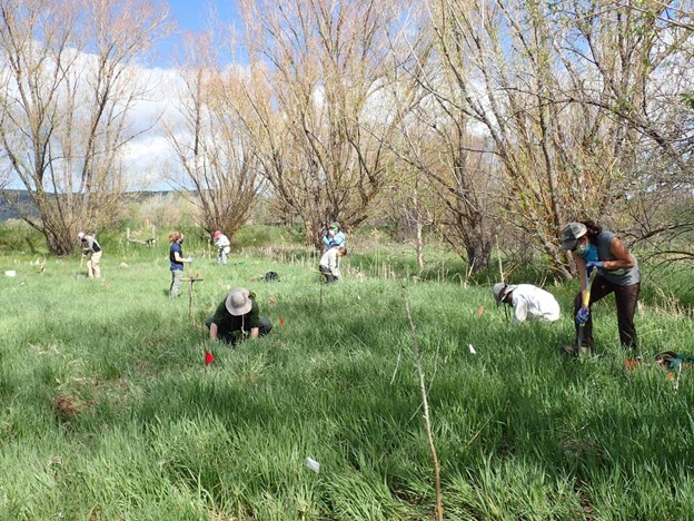 Featured image for the Restoring a Wetland:  Enhancing the Conservation and Ecosystem Service Values of the Colorado Front Range Watershed project.